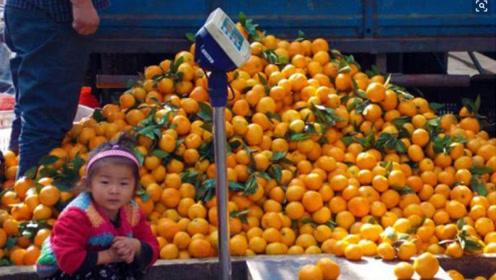 水果收购商站出来说:抱歉,我一点也不同情这些滞销的果农!