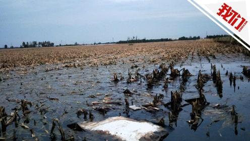 山东博兴台风后原油泄漏:大片农田被污染 赔偿方案正协商