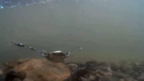 不同形态的亮片泳姿有什么差异?一起看看水下的样子吧