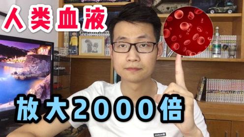 血液放大2000倍能看见数以亿计的红细胞!太壮观了