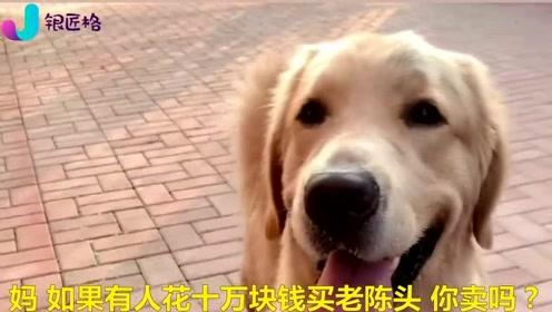 狗狗出了犀利的问题给主人,结果男女主的答案差别太大