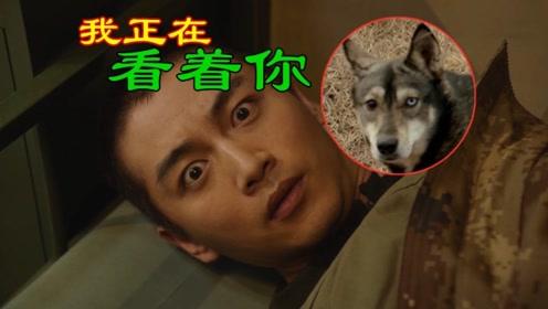 《陆战之王》穿帮镜头!陈晓捡到的流浪狗居然进化了
