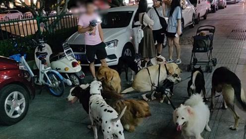长沙一男子牵16只狗闹市直播引围观 警方:已对其行政处罚