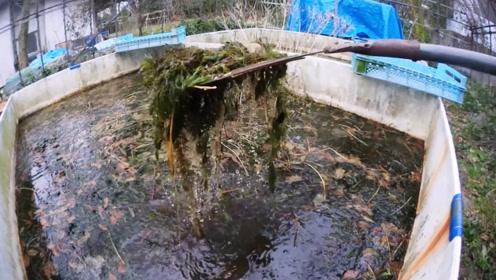 放置5年的水池抽干后会有啥?一池脏兮兮黑水,却成了它们的最爱