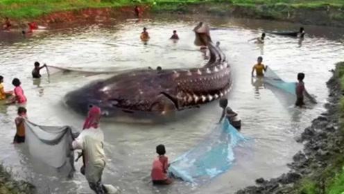 黑龙江惊现全球最大淡水鱼,重达两千斤,属恐龙同时期古生物