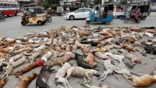 在国外的街头上竟然躺着近千只狗狗尸体、得知原因后表示心疼