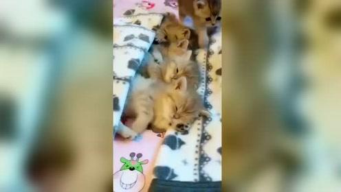 一只猫上个厕所 把所有猫都吵醒了
