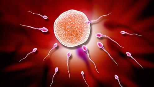 """女人""""排卵受精""""过程大揭秘,到底有多复杂,看完感叹生命的伟大"""