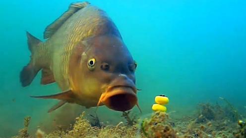 鱼儿是怎么上钩的?水里实拍鱼儿上钩全过程,画面难得一见