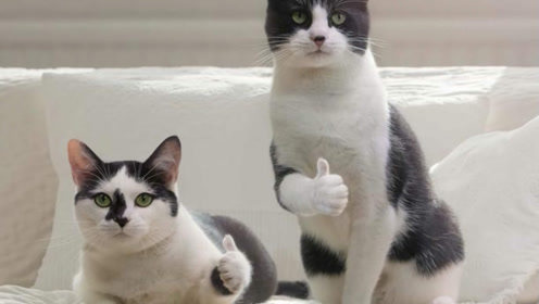 为什么都在便便这件事上猫猫和狗狗会有这两种完全不同的态度?