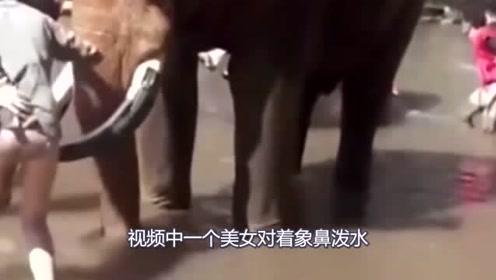 国外女子动物园摸大象的鼻子,下一秒令人咋舌