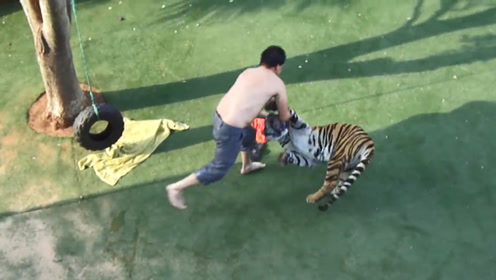 醉酒男子跑进动物园,跳进老虎领地挑衅,结局让人意想不到