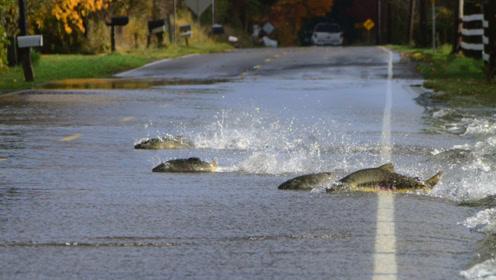 这群鱼成精了,排着队过马路,结果被狗子捡了个漏