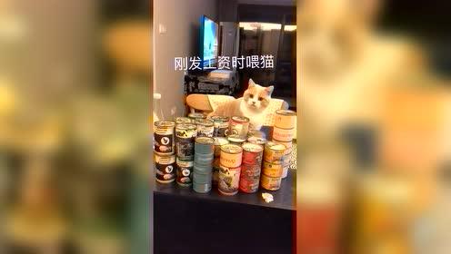 发工资时喂猫vs月底时喂猫!