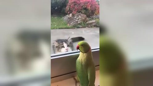 鹦鹉:我感觉这货是在挑衅
