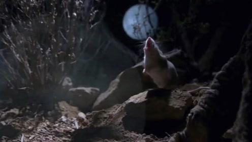 这样的小老鼠你见过吗?看到这样的小老鼠,网友:还真是凶呀