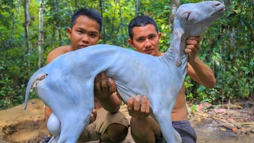 """两个小伙子偷偷抓了只山羊,打算做""""烤全羊"""",出锅时吃撑了"""