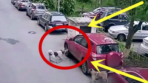 越野车遭遇流浪狗报复,轮胎惨遭毒手,要不是监控谁能信!