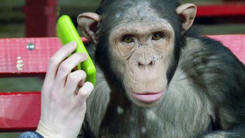 猴子第一次打电话,这一幕真的太逗了