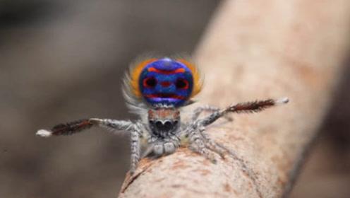 男孩捡到会开屏的蜘蛛,养15年没舍得放生,爷爷回来傻眼了