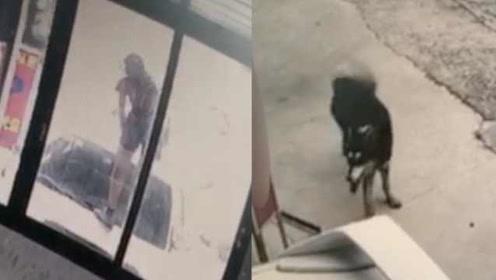 女子被狗追爬车顶遭索赔,狗主人:又不是我让狗追的