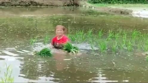 大婶我怎么感觉你家的田像沼泽啊 这也太深了吧