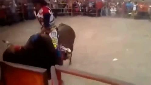 骑手被牛角挂住裤腿,疯狂摔打,场面彻底失控