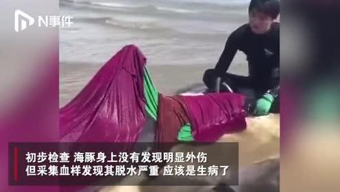 山东威海一幼年海豚浮出海面:系生病,输液后被带回救助中心