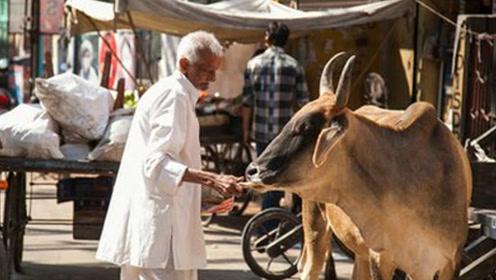 世界上最嚣张的动物,虽然泛滥成灾,却没人敢动它一根毫毛!
