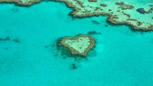 全球变暖后果多可怕?2070年地球所有珊瑚礁或将消失!