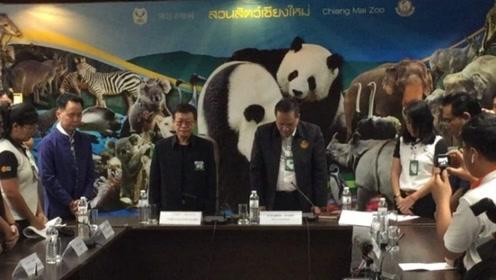 """大熊猫""""创创""""突然离世 60秒回顾它在泰国生活的日与夜"""