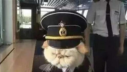为什么大型军舰或航母上,都会养一只猫呢?作用让人哭笑不得!