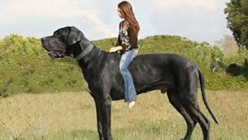为何女子为了只狗不结婚,看完狗的真面目,答案非常明了
