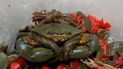 太罕见!渔民捕获3.6斤重超大青蟹