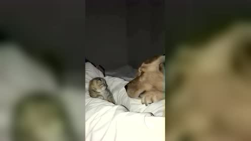 狗狗:你干嘛打我?猫咪:谁叫你拿鼻孔吹我!