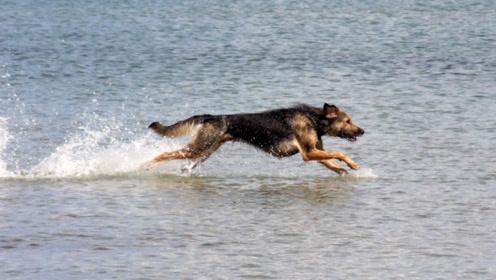 """主人使坏把狗狗丢到河里,下一秒,狗狗居然""""成精""""了!"""