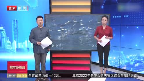 """广东吴川:白色小鱼成群""""飞""""出海面"""