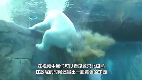 北极熊在水里放屁让人措手不及, 游客:不是亲眼所见都不敢相信