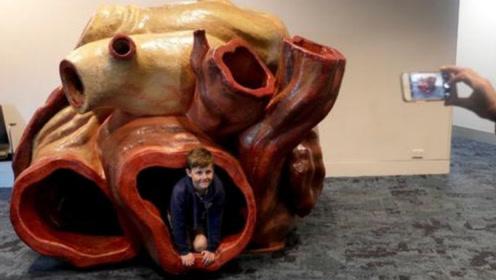 鲸鱼的心脏有多大?里面可以当客厅,血管里面能睡人