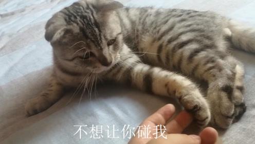 主人尝试压小猫的爪子,结果一抹差点被咬,猫:你!别碰我