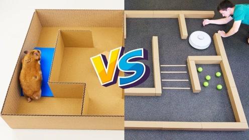 仓鼠和扫地机器人比赛,你猜谁能更快走出迷宫?结局出乎你的意料