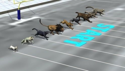 猛兽之间终迎来一场瞩目的公平竞赛,谁会是最后赢家?意想不到!