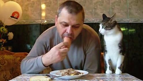 喵星人想吃香肠,抢不到就开始卖萌,猫:我太难了