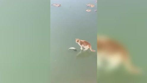 冰里鱼馋死猫