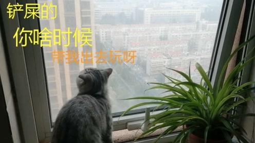 小猫看着窗外发呆,猫:铲屎的,你啥时候带我出去玩呀