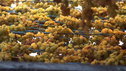 葡萄干制作过程有多复杂,看制作过程就明白了,看你还敢吃吗?