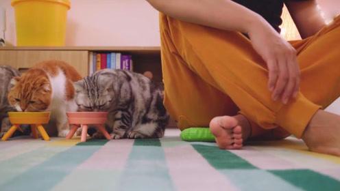 当猫咪吃饭时在边上假装放屁,看看猫咪会有什么反应?