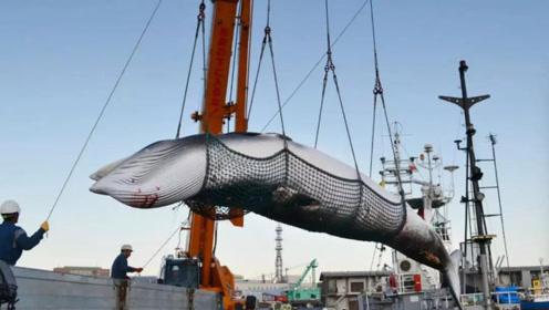 中国人为什么不吃鲸鱼?让日本人纳闷多年的问题,现在终于明白了