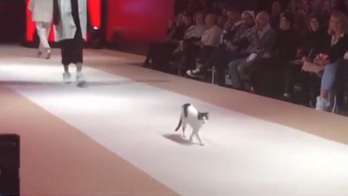 """小猫误闯时装秀,下一秒看不下去了,亲自教模特们走""""猫步""""!"""