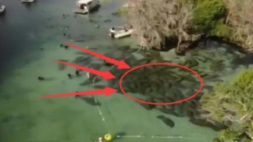 """男子划船意外发现水底""""石头""""在动,仔细查看,被吓到了"""